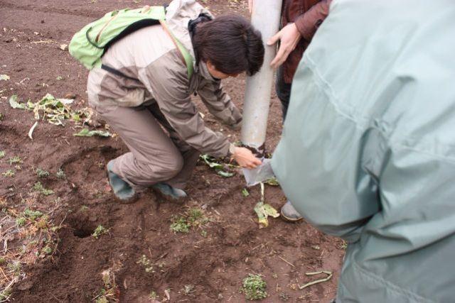 3. ひとつの品種の作付け範囲から、四隅と中央の土壌を採取。