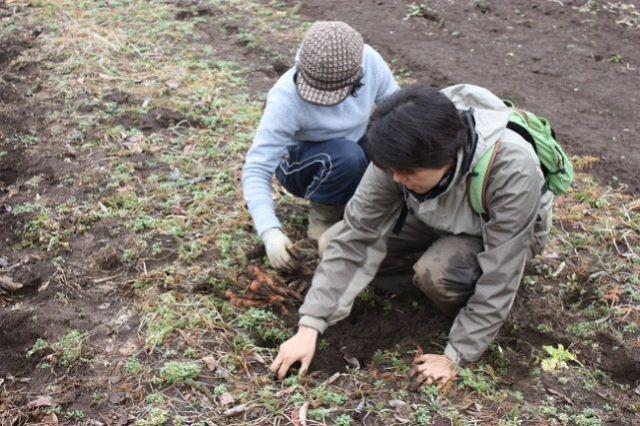 7. 今回採取された土壌でもっとも高い線量が計測された地点から、作物(今回の測定ではニンジン)を採取。